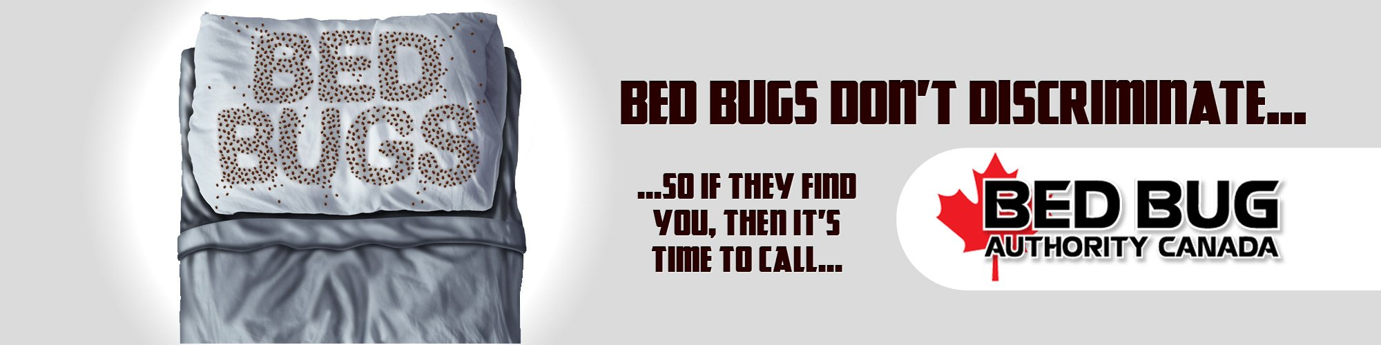 bed bug extermination toronto ontario