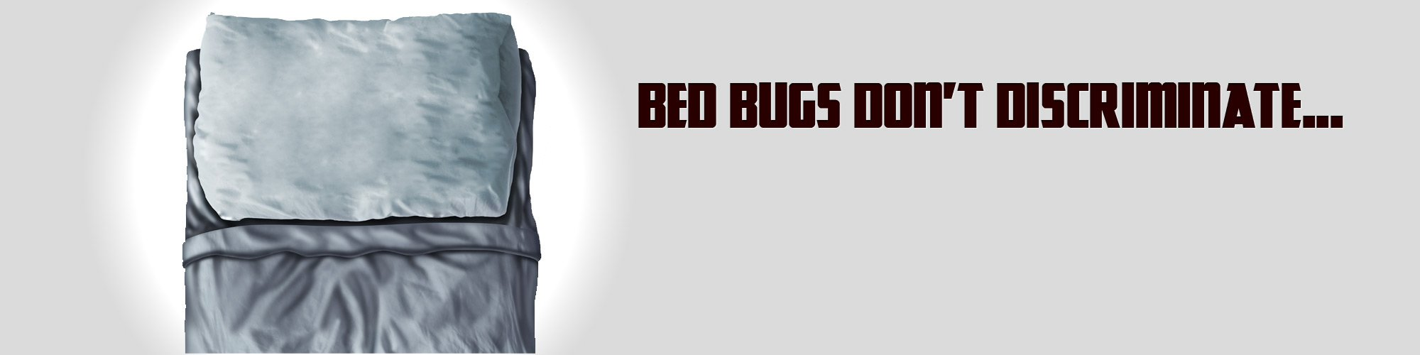 bed bug removal toronto ontario