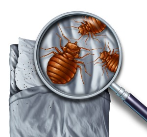 Preparing for Your Bed Bug Heat Treatment