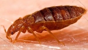 bed bug heat treatment Cambridge on