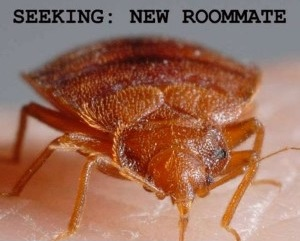 toronto bed bug infestation